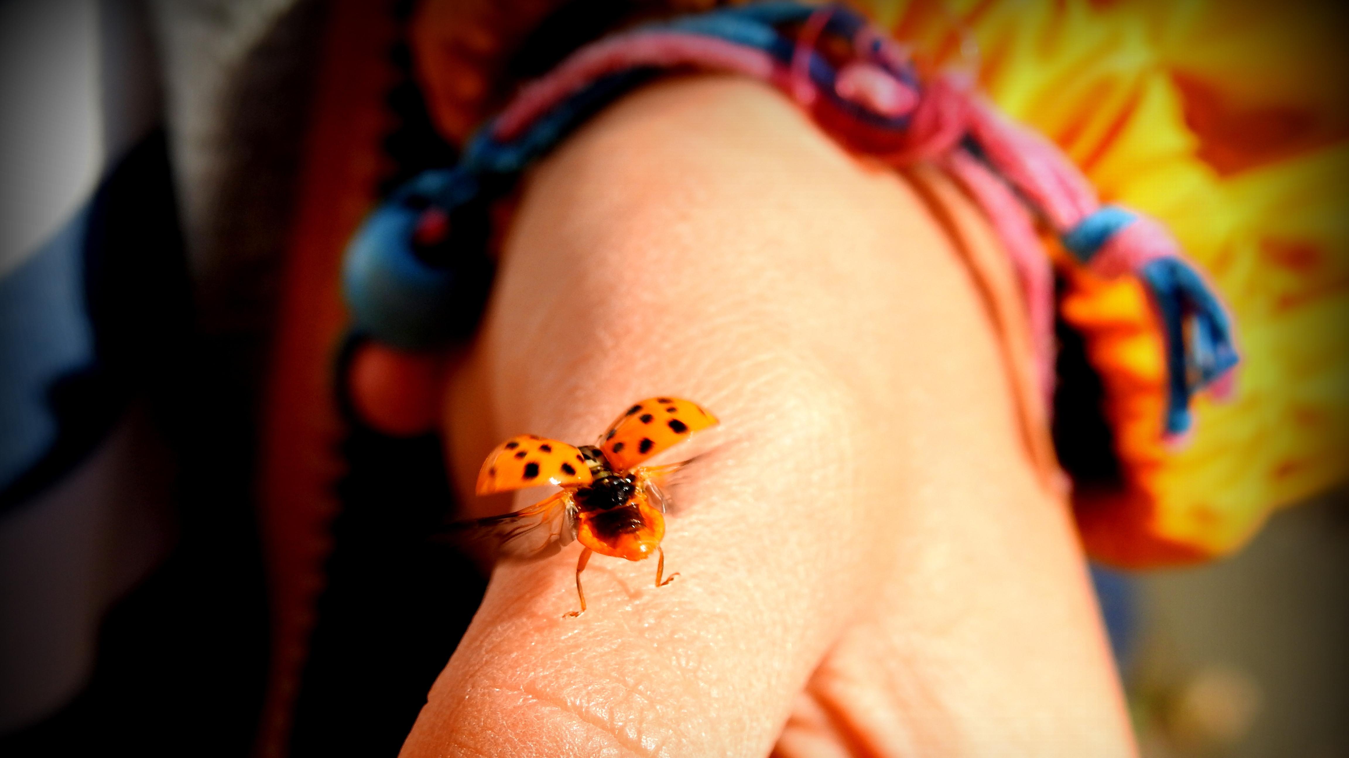 Hand mit Marienkäfer